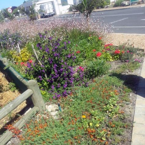 Flowers in Sunningdale.
