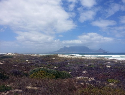 Cape fauna and flora