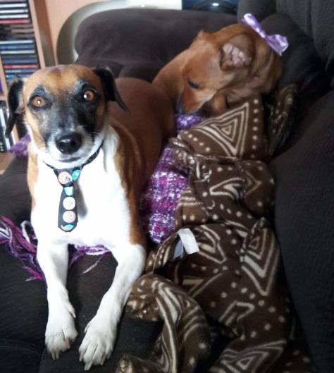 Doggies wearing ties