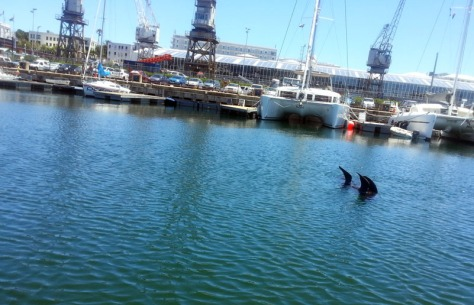 Seal in Waterfront harbour